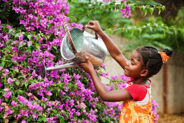 Picture of a young female child watering a a plant
